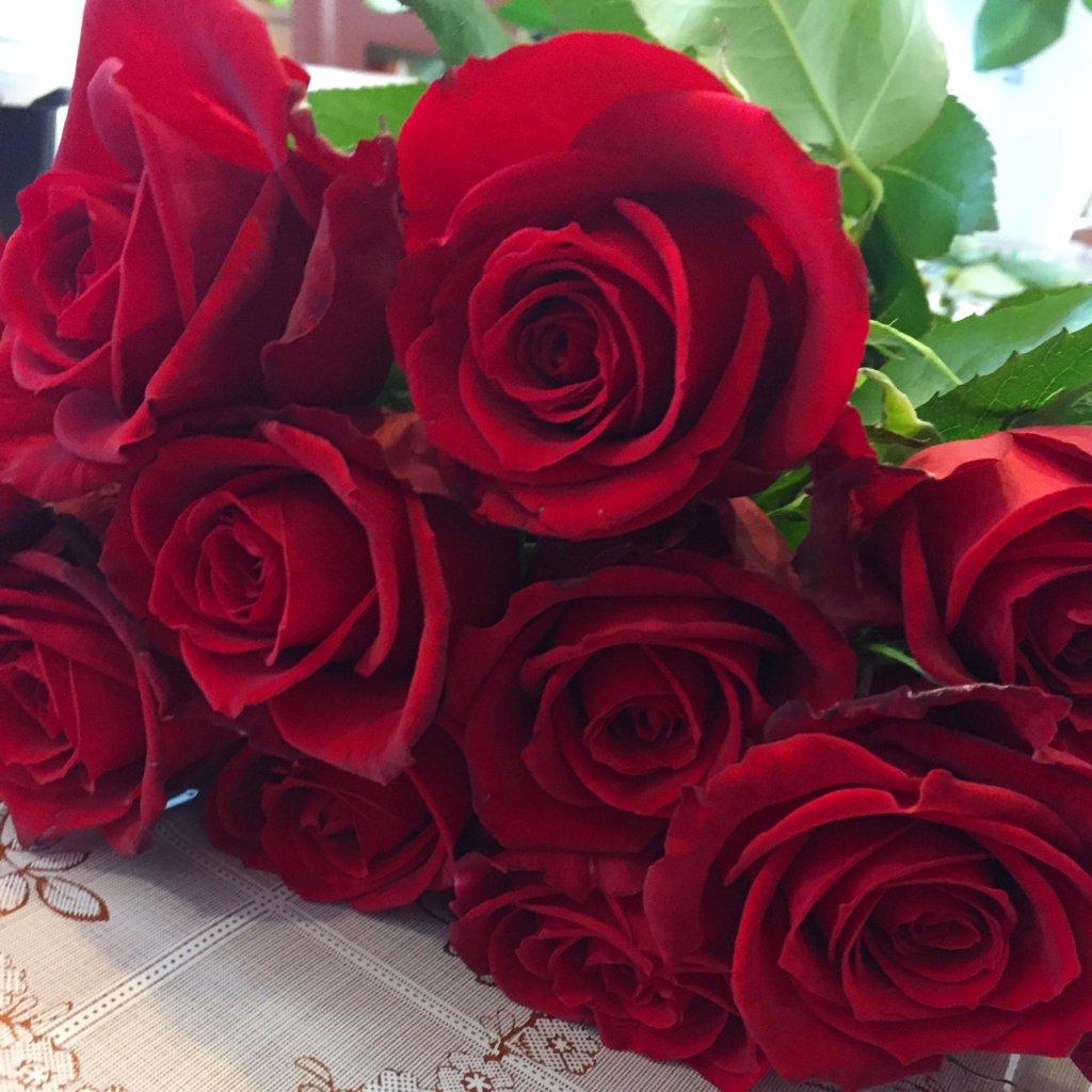 保存加工前の赤薔薇