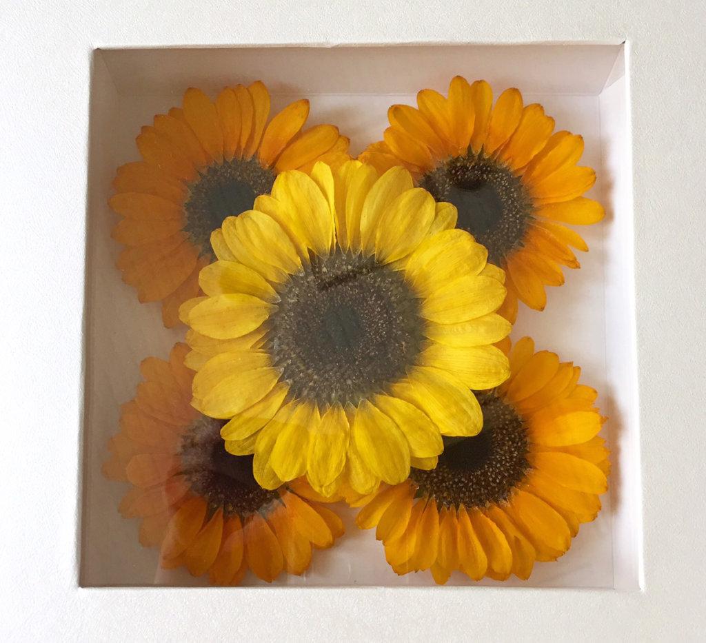 ひまわりのプロポーズ花束を綺麗に保存