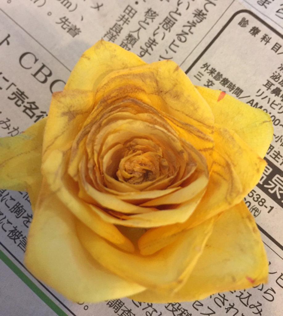 柔らかな色合いの黄色のバラの花束