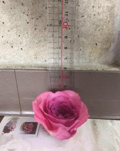 お花の高さの測り方
