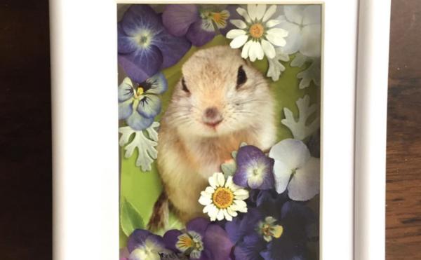 ペットとお花の写真