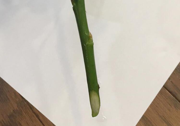 茎は斜めにカット